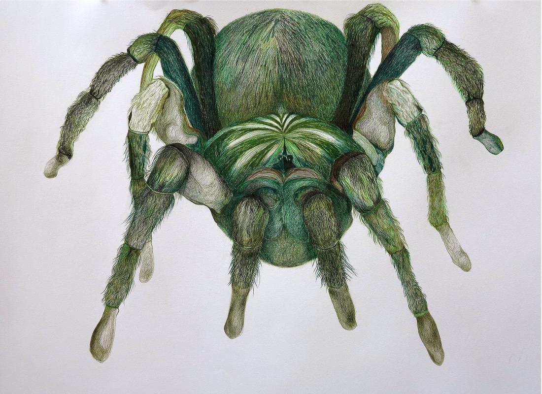 Green tarantula