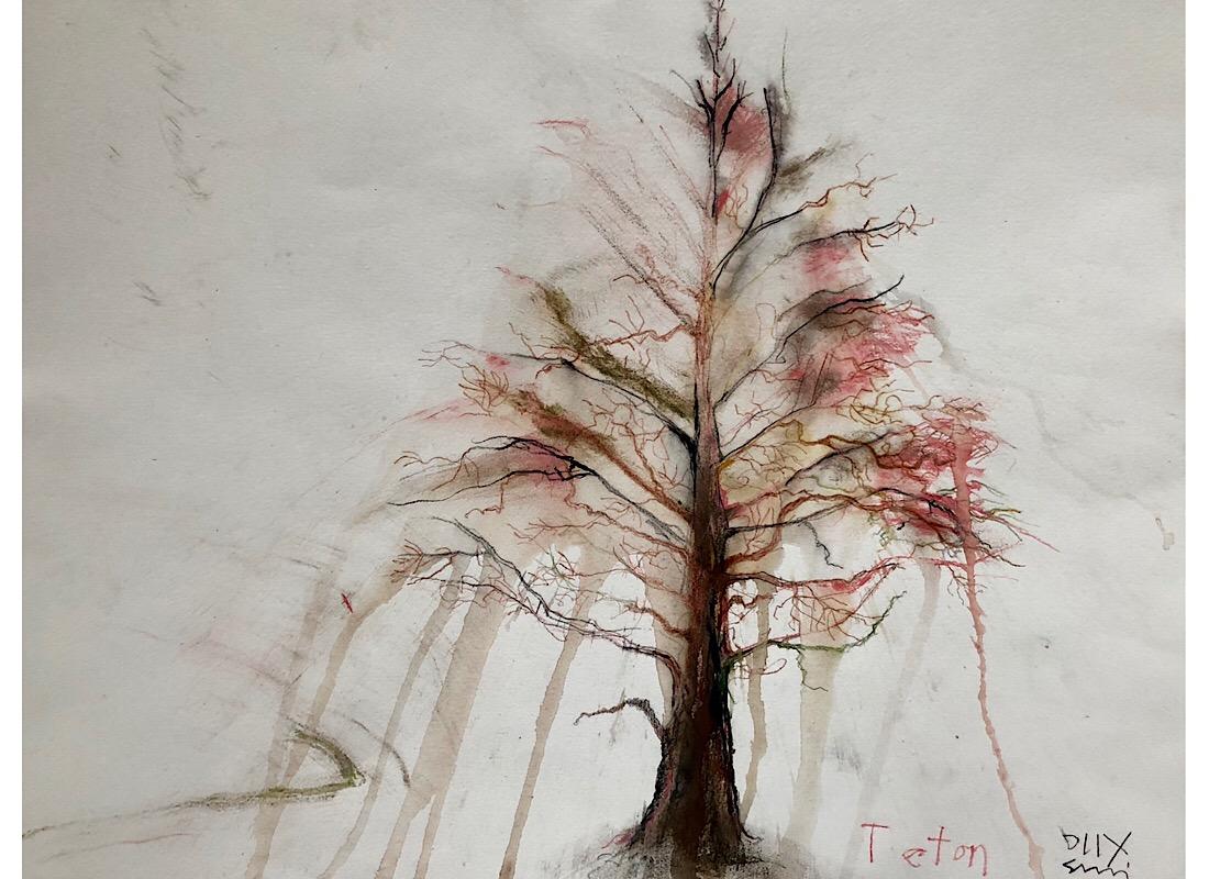 Teton pine