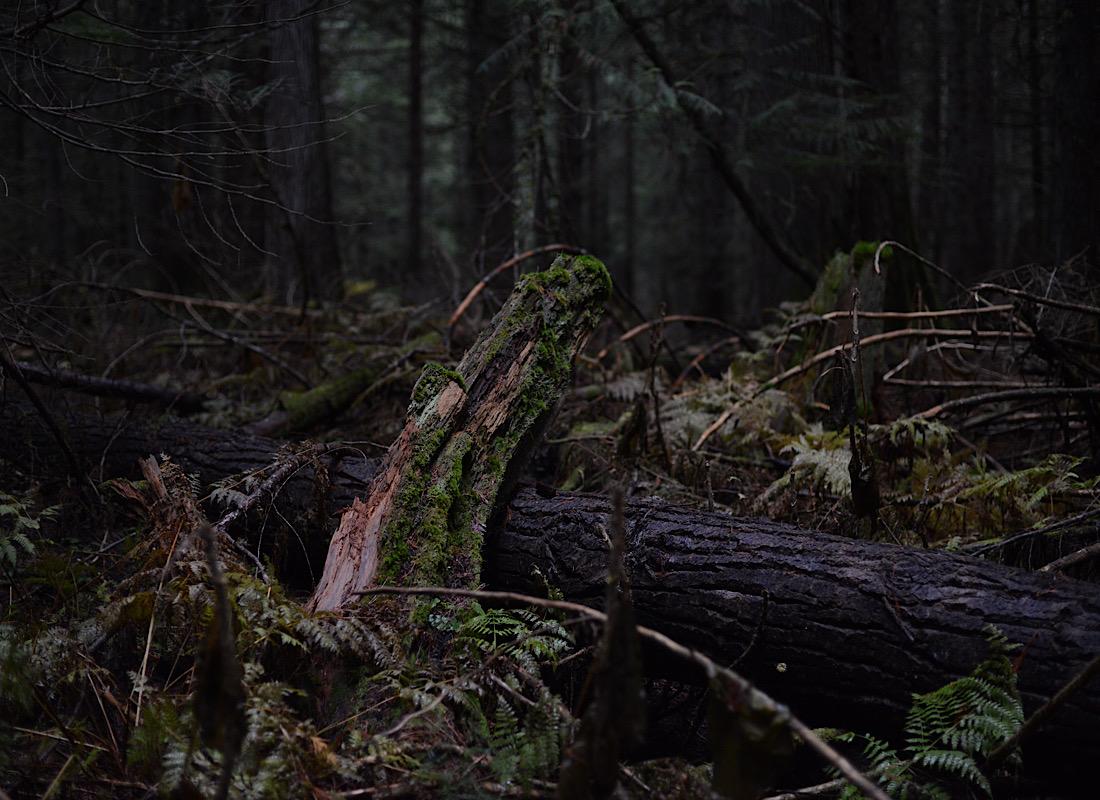 Primal forest