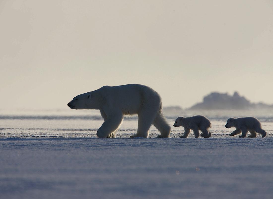 Polar wilderness adventures on Svalbard
