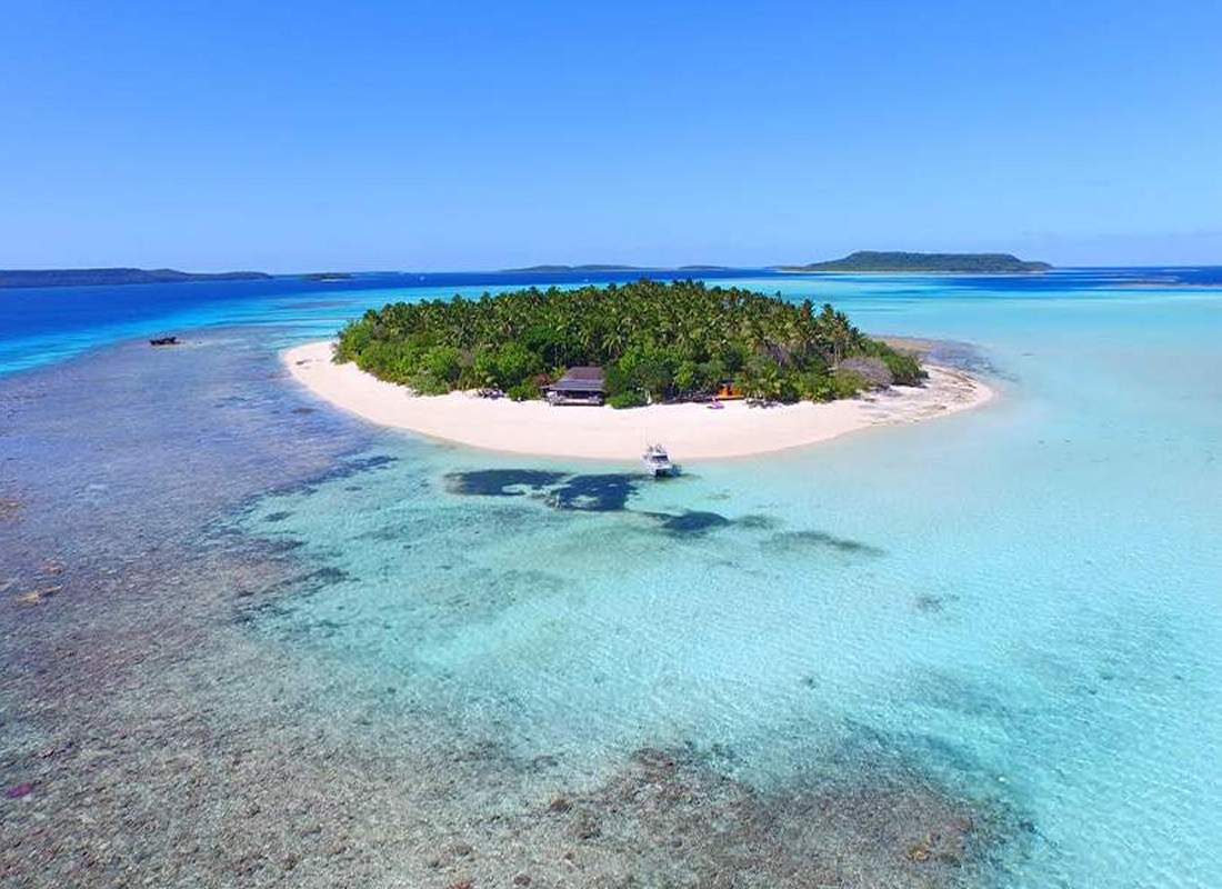 Free dive with Humpback whales in the kingdom of Tonga